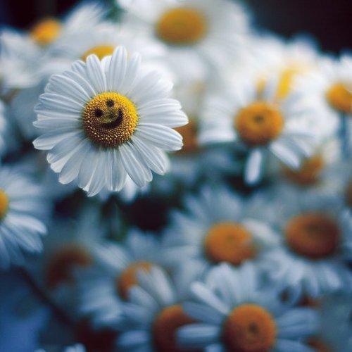 Smile! :-) © Булавина Дарья