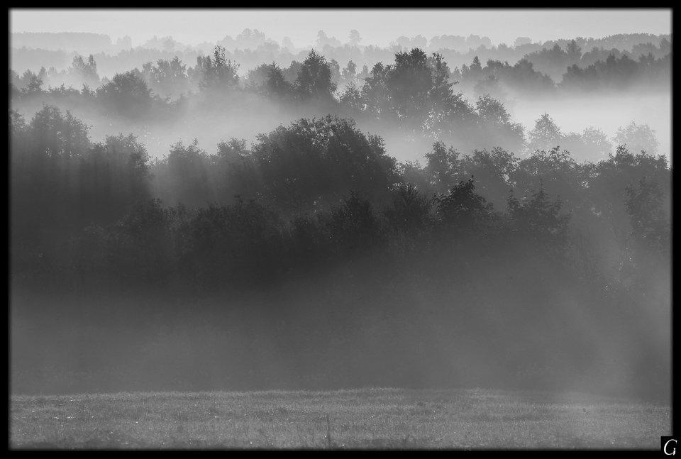 Утро, рассвет, Талашкино, струны, туман, Gorshkov Igor_Feanorus