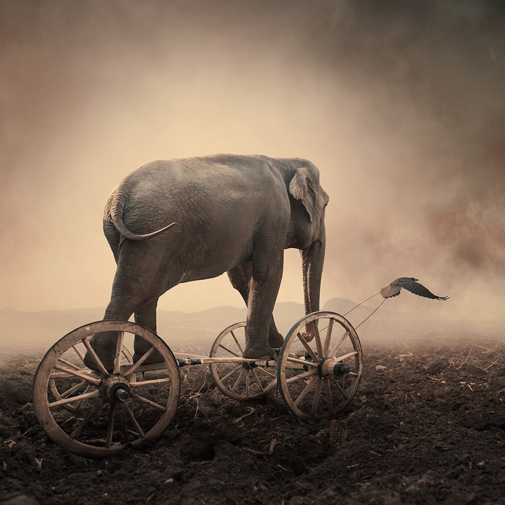 sky, reflection, light, clouds, ground, manipulation, elephant, mounting, wheel, corn, psd, spinner, tutorials, stage, happy, heat, head, Caras Ionut