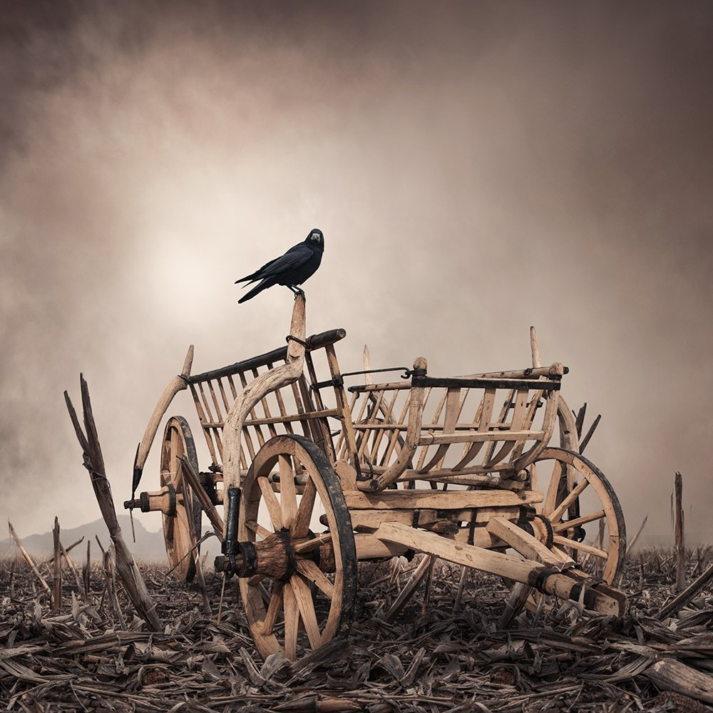 crow, reaven, cart, ground, photoshop, manipulation, psd, mounting, tulip, light, Caras Ionut