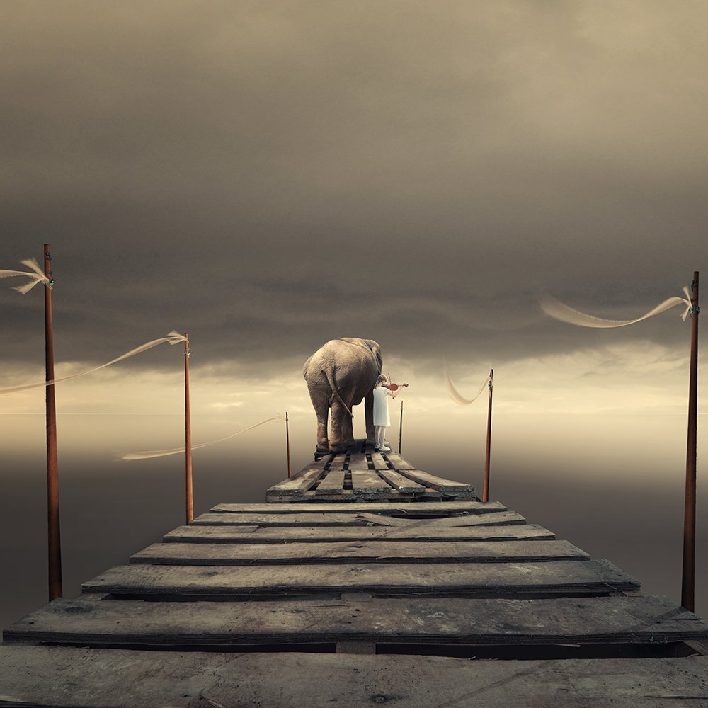 wheel, spinner, elephant, ground, sky, light, reflection, corn, manipulation, tutorials, psd, clouds, mounting, playing, girl, violin, plates, wood, Caras Ionut