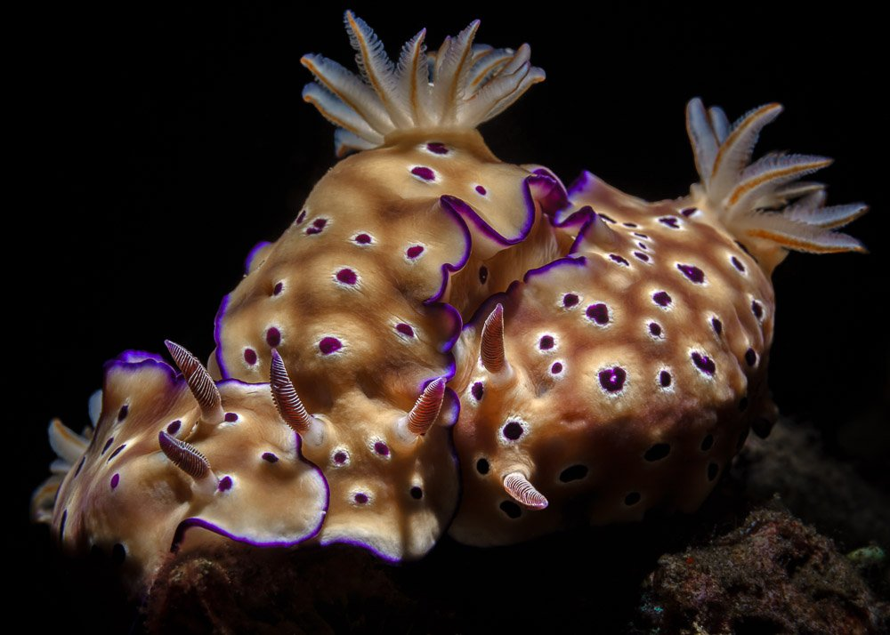 nudibranches, Савин Андрей