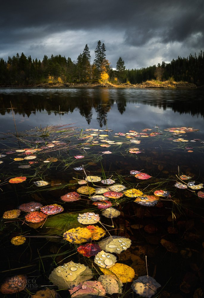 lake,autumn,leaves,colors,norway,lake shore,autumnal,island,, Szatewicz Adrian