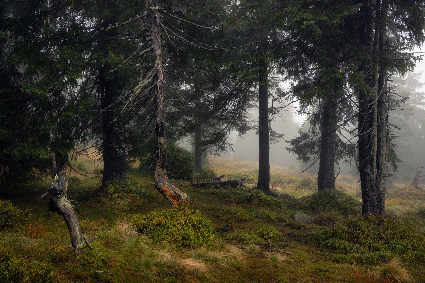 nature, forest, autumn, landscape, colors, morning, foggy, природа, лес, осень, пейзаж, цвета, утро, туман,, Imiełowski Grzegorz