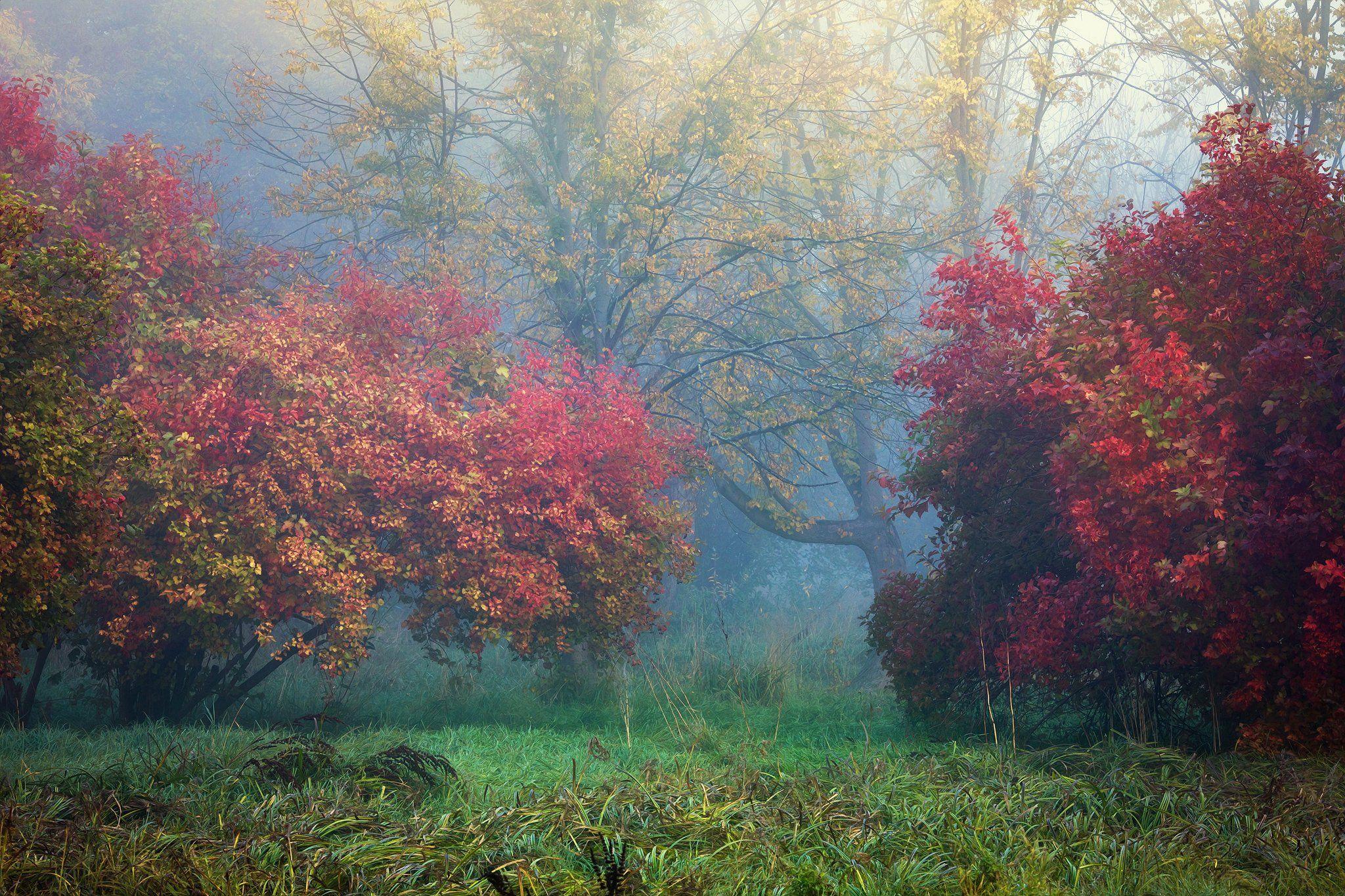 autumn symphony осенняя симфония magic garden park trees grass colourful mist foggy morning, Radoslaw Dranikowski