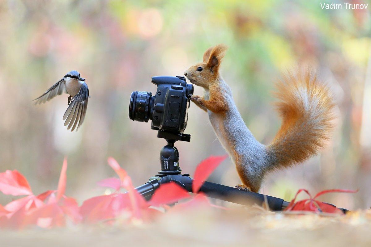 белка, squirrel, птица, осень, фотосъёмка, Вадим Трунов