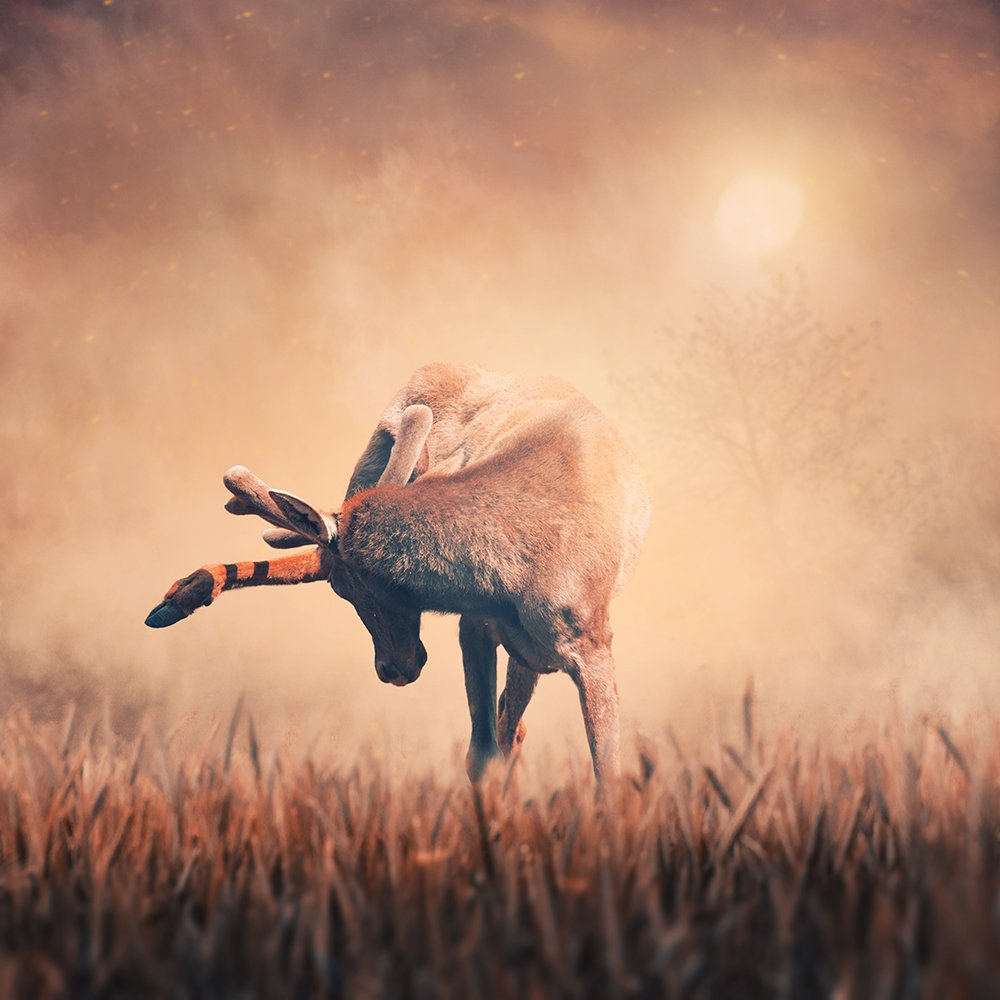 deer, sun, umbrella, ground, sky, clouds, light, relaxing, psd, tutorials, manipulation, tulips, shinning, light, tree, heat, heat, grain, Caras Ionut