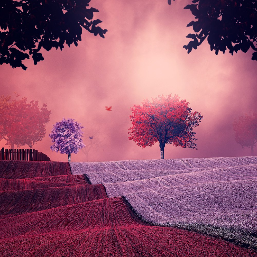 red, pink, infusion, manipulation, psd, tutorials, dreaming, leaf, tree, field, wave, light, spot,, Caras Ionut