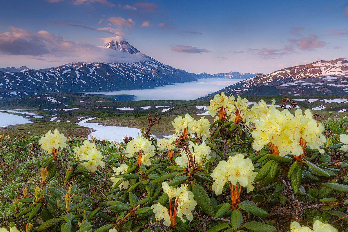 Камчатка, вулкан, пейзаж, природа, цветы, лето, путешествие, фототуры, Денис Будьков
