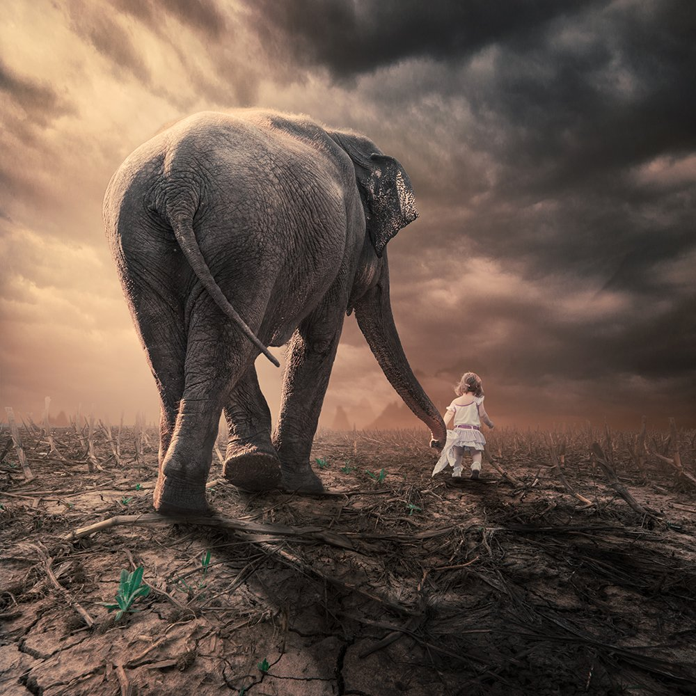 clouds, corn, elephant, girl, ground, head, heat, ioana, journey, light, manipulation, mounting, mounting happy, psd, reflection, sky, spinner, stage, tutorials, Caras Ionut