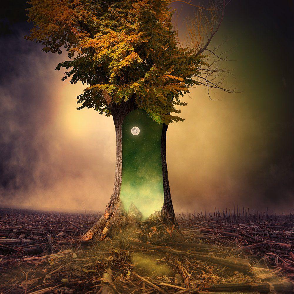 clouds, colorful, crow, dreaming, flowers, fly, fog, garden, green, harmony, leaf, light, magic, manipulation, moon, mystery, photoshop, psd, regal, shadow, stars, sun, tree, tutorials, wood, world, Caras Ionut
