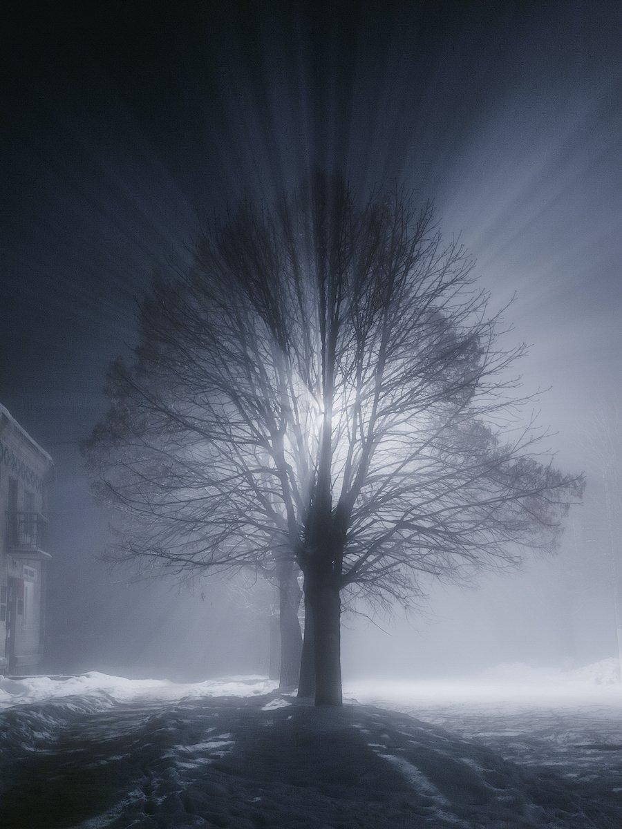 украина, коростышев, улицы, дерево, свет, лучи, тишина, молчание, осознание, осознанность, жизнь,, Чорный Александр
