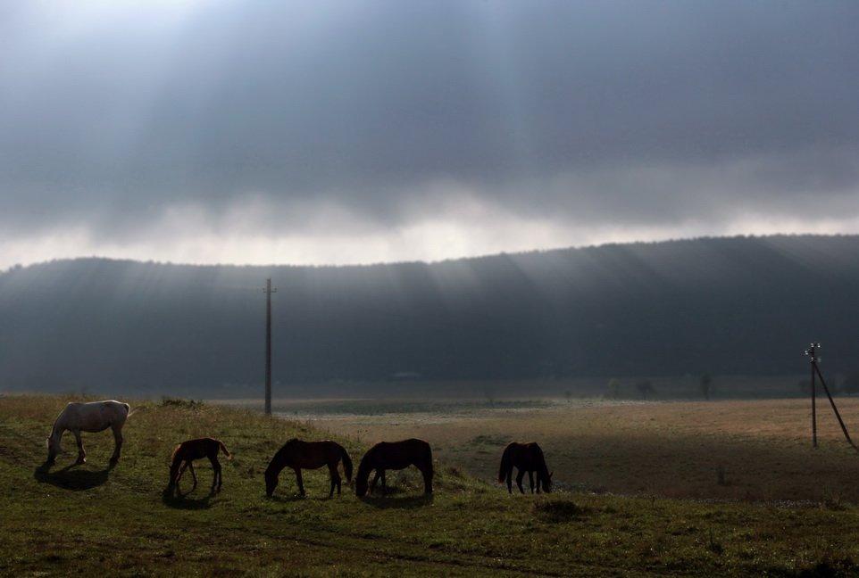 животные,природа,пейзаж,кони,лошади,пасутся,скот,стадо,домашние животные,осень,поездка, savirishka