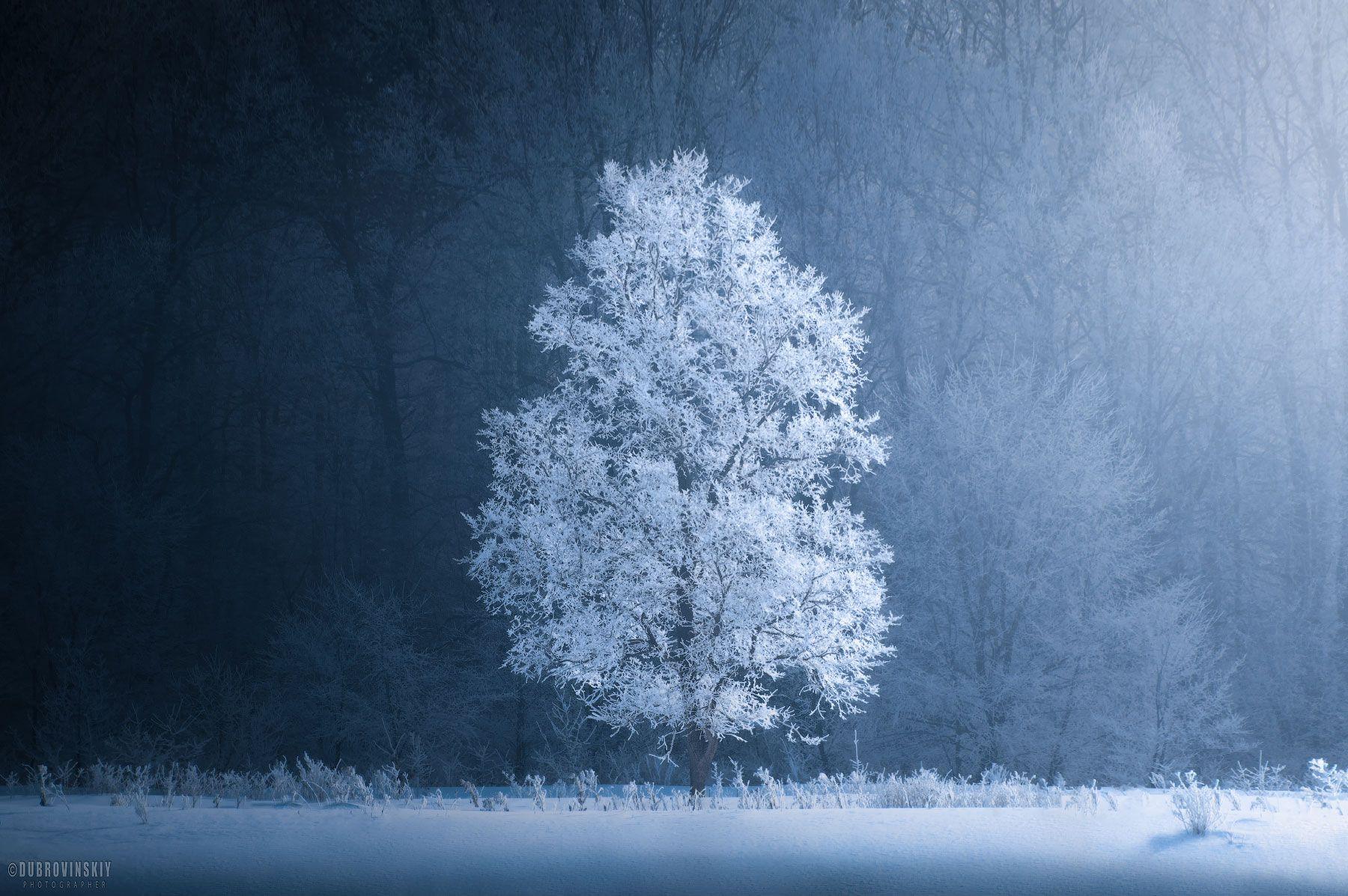 дерево, иней, зима, мороз, Дубровинский Михаил