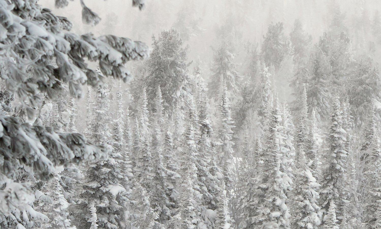 снег, иней, мороз, зима, пихты, кедры, гора зелёная, шерегеш, горная шория, сибирь, Валерий Пешков