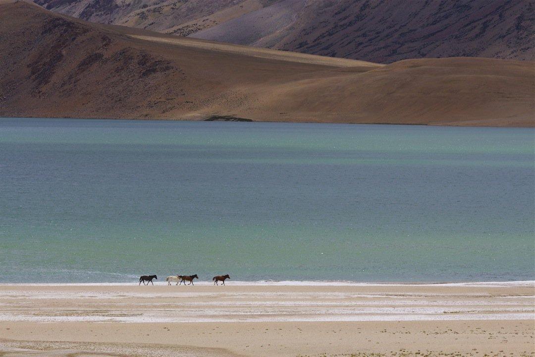 Берега, горы, лошади, малый тибет, озеро, Ирина Назарова