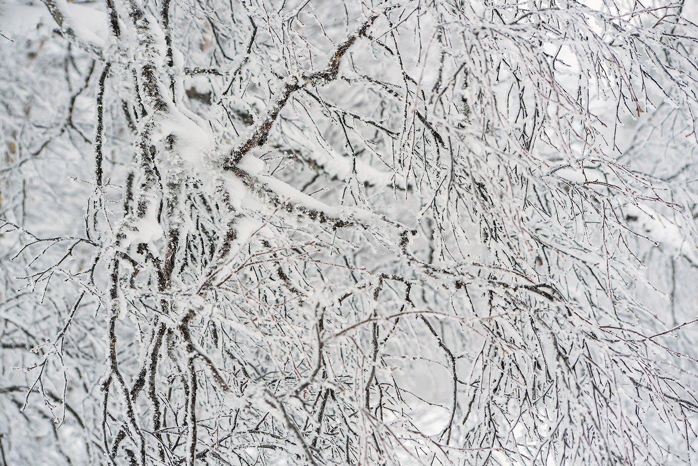 береза, ветки берёзы, иней, мороз, зима, облачность, туман, гора зелёная, шерегеш, горная шория, сибирь, Валерий Пешков
