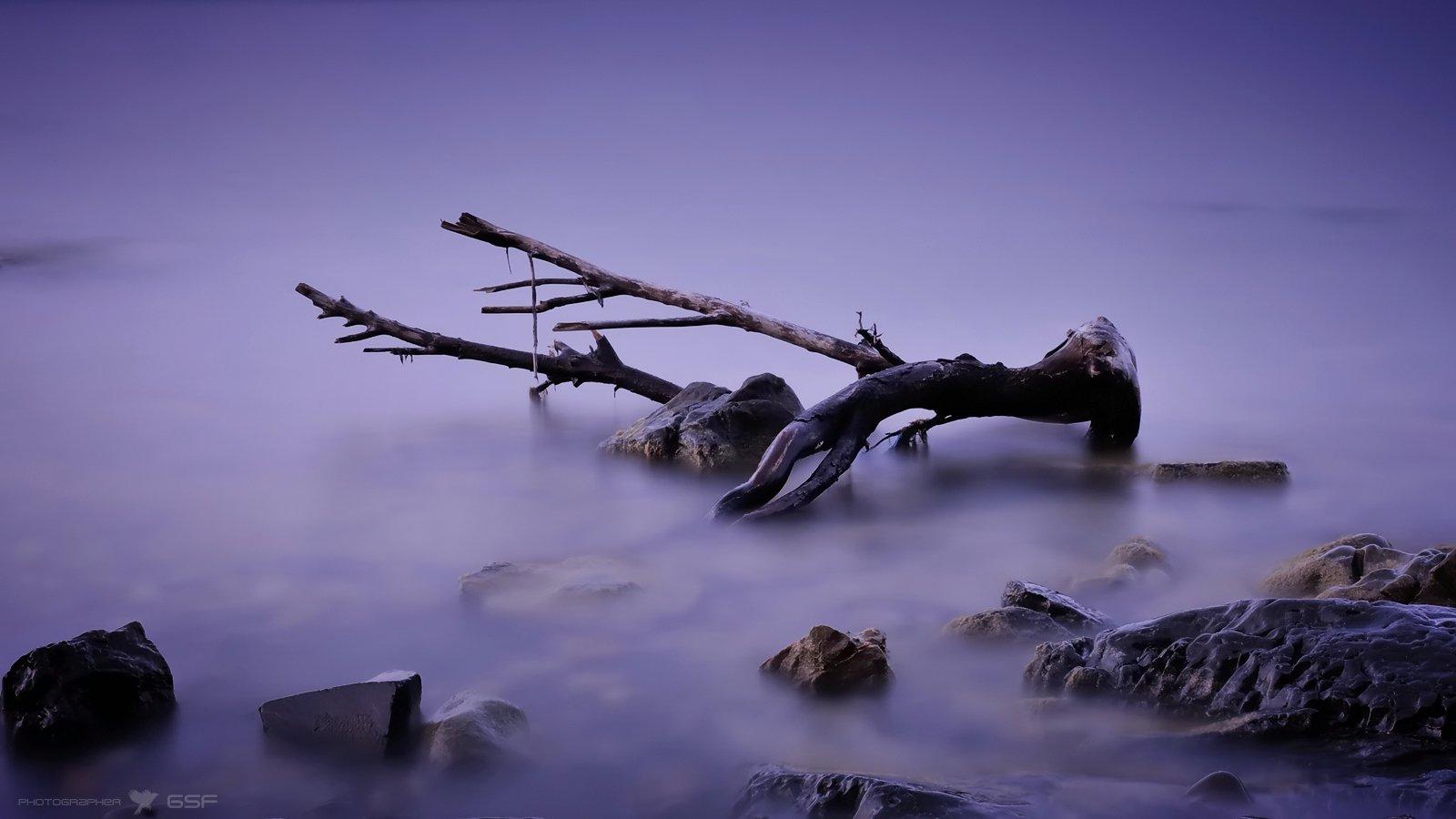 море, вода, коряга, сумерки, Serj Master