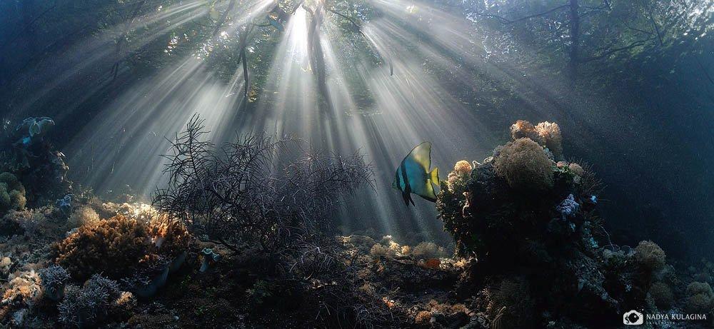 Закат, Индонезия, Корни, Лучи, Мангровые заросли, Подводная съемка, Подводное фото, Путешествия, Раджа Ампат, Рыба, Свет, Солнце, nadeika