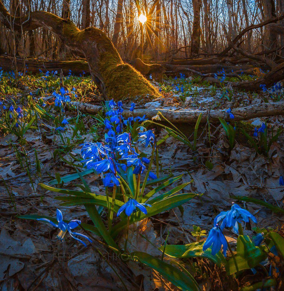 Весенний лес на закате. Лашков Фёдор