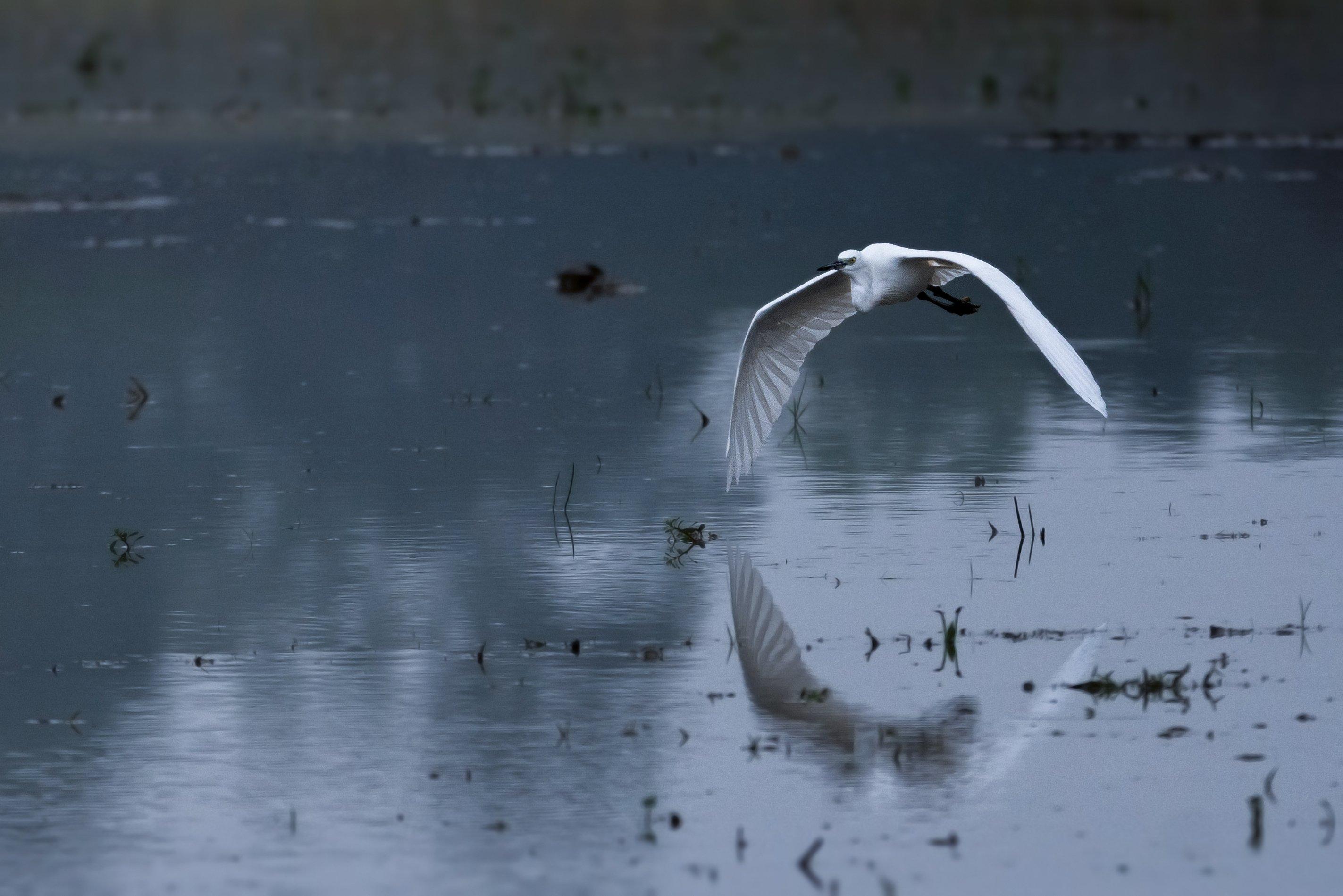 birds, 2020, 2021, nature, wildlife, birding, wild, India, Paul Pinak