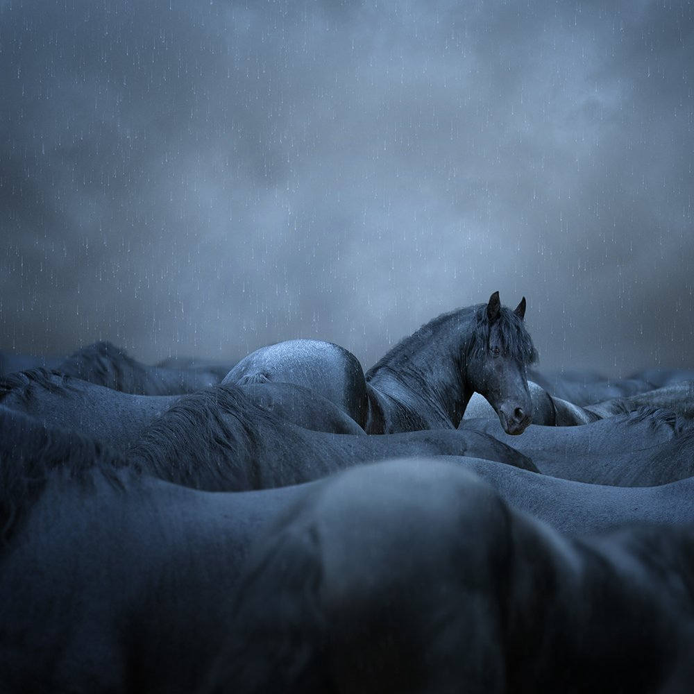 autumn, birds, black, clouds, dear, fog, ground, horse, leaf, man, manipulation, mounting, mystery, photoshop, psd, rain, sky, tree, tutorials, working, Caras Ionut