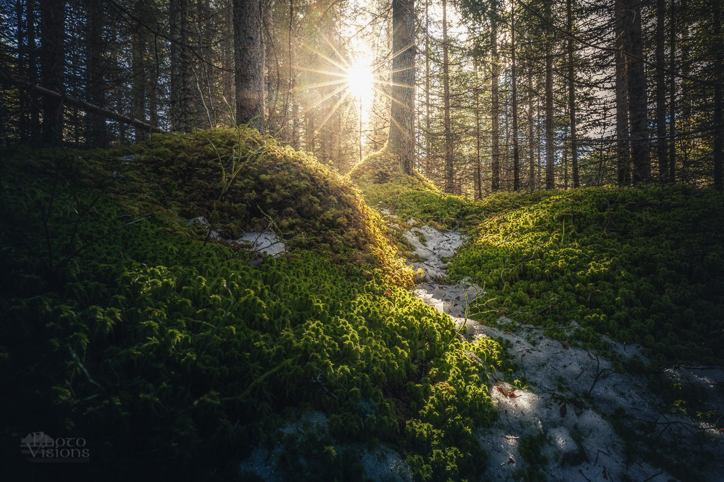 sun,forest,woodland,woodlands,woods,boreal,norway,norwegian,tree,trees,, Szatewicz Adrian