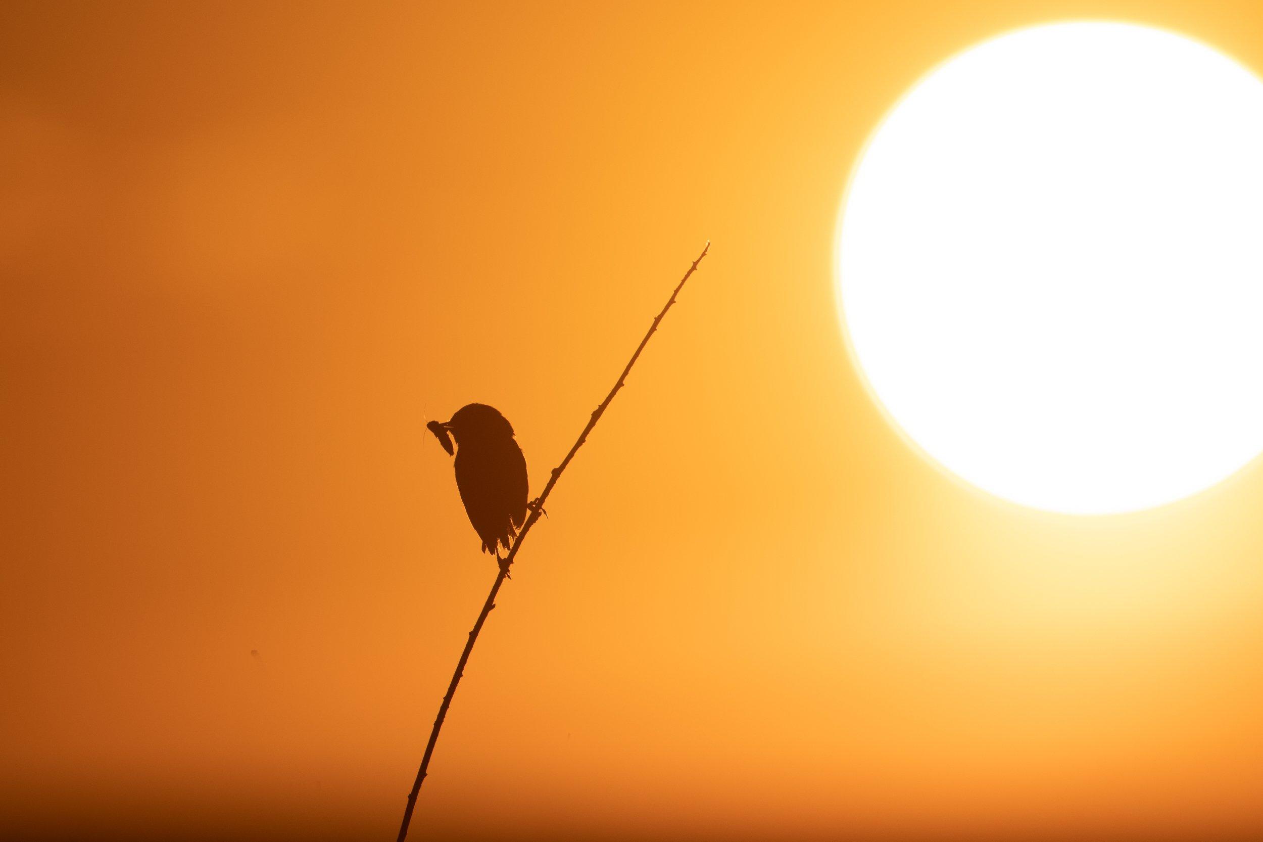 природа, животные, птица, Цветков Сергей