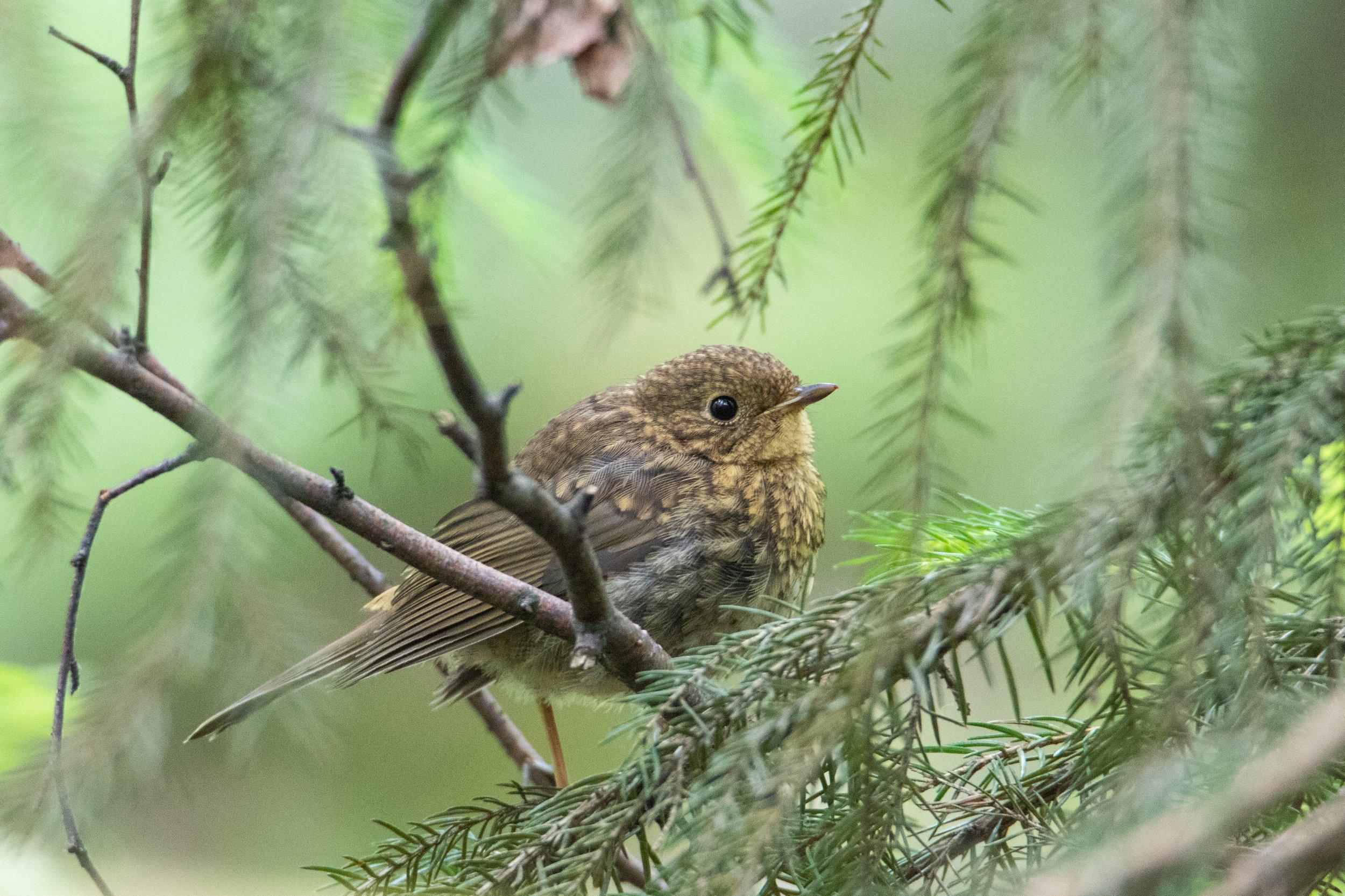 природа, птицы, животные,, Цветков Сергей