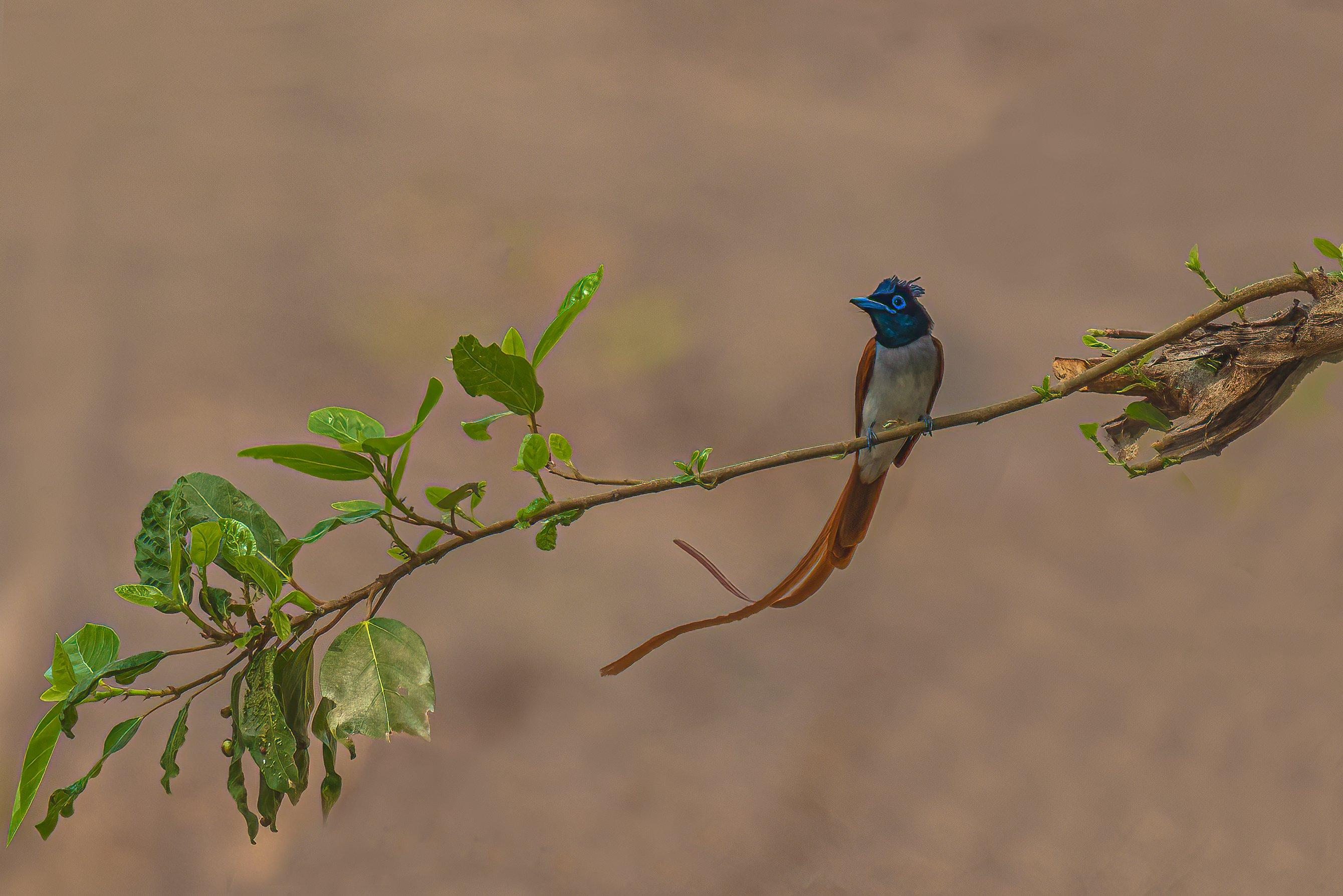 #bird, Saxena Vipul