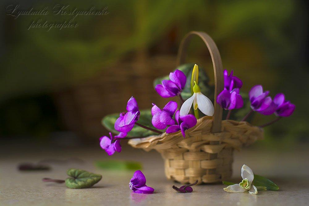 художественное фото,натюрморт,букет с цветами,цикламены., Костюченко Людмила