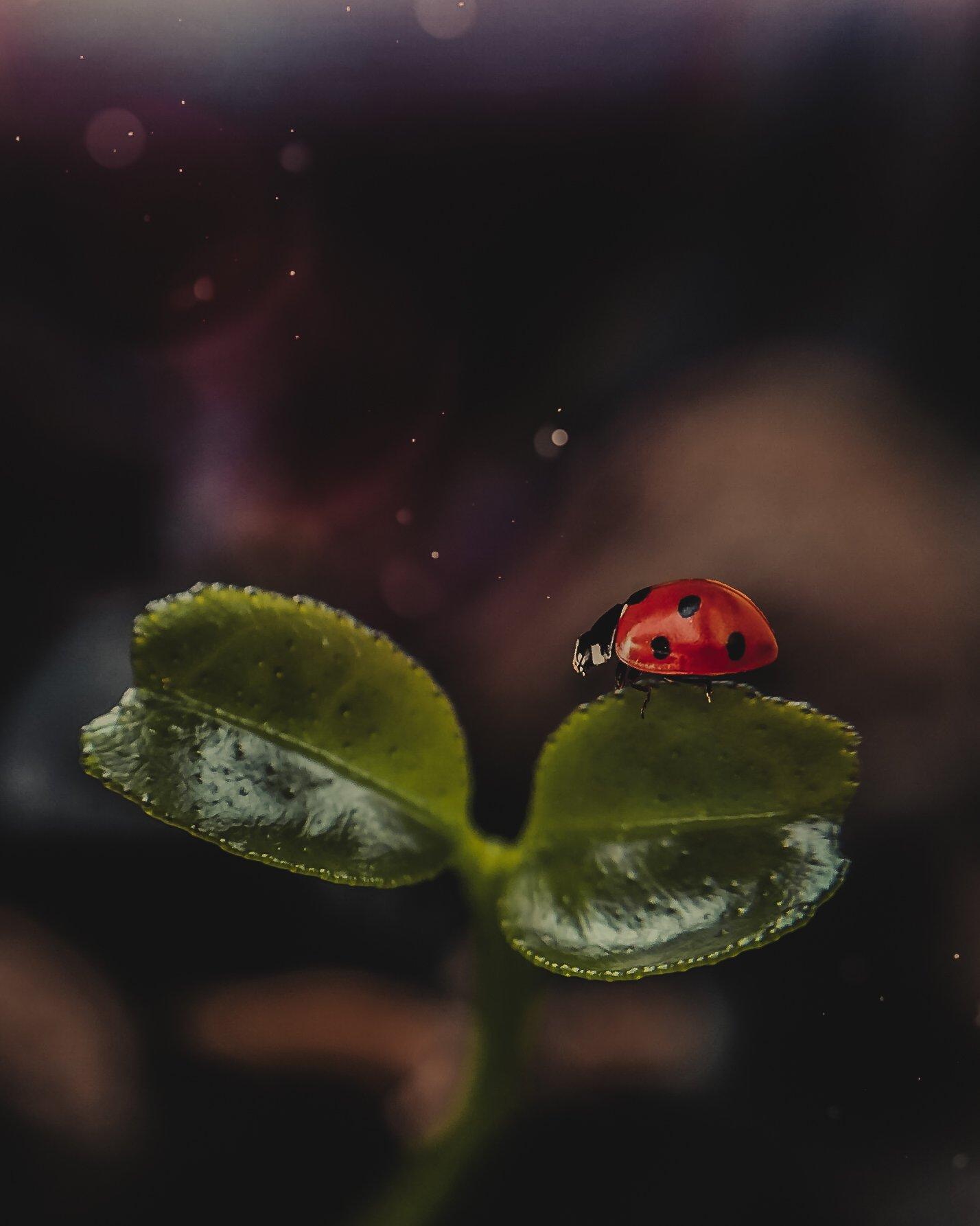 макро, арт,природа ,насекомые, Smirnova Olga
