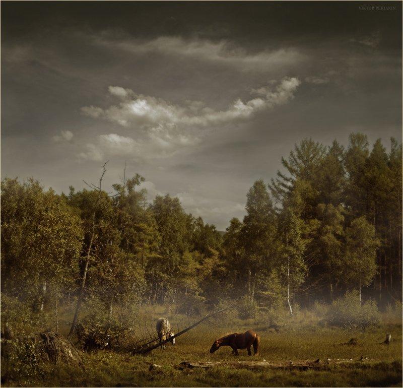 берег, байкала, лошади, лес, болото, Виктор Перякин