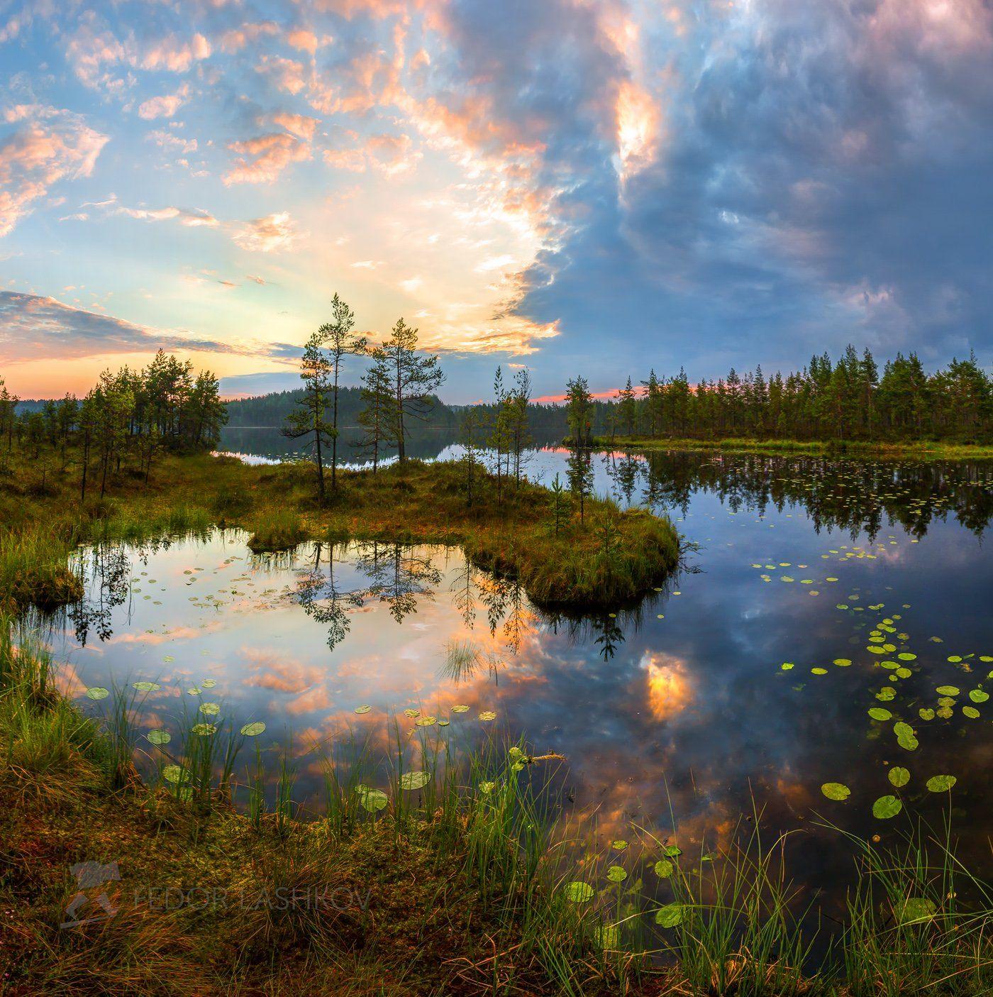ленинградская область, рассвет, лето, сосны, озеро, отражение, деревья, берег, небо, облака, болото,, Лашков Фёдор