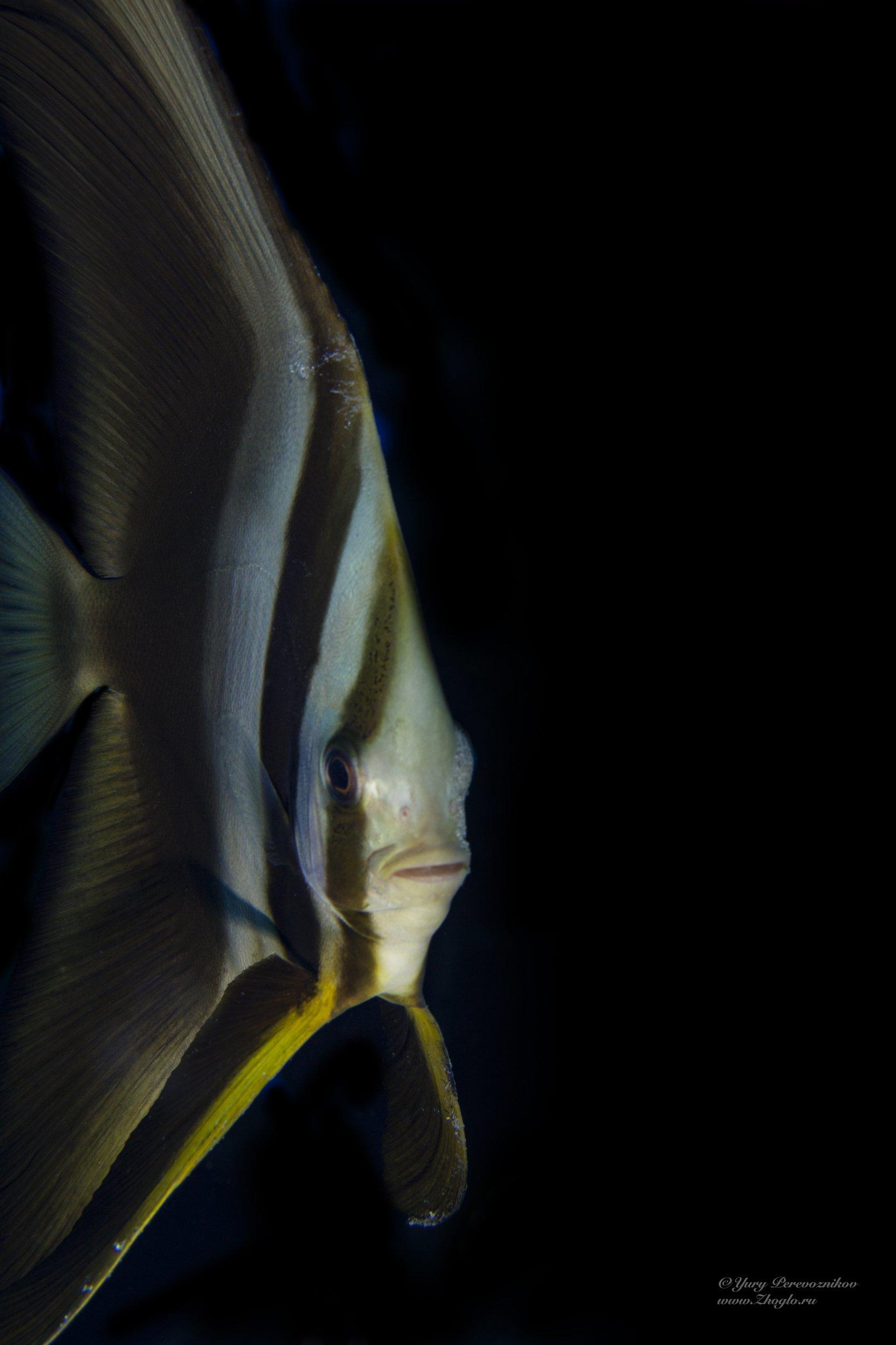 подводное фото подводный мир дайвинг, Перевозников Юрий