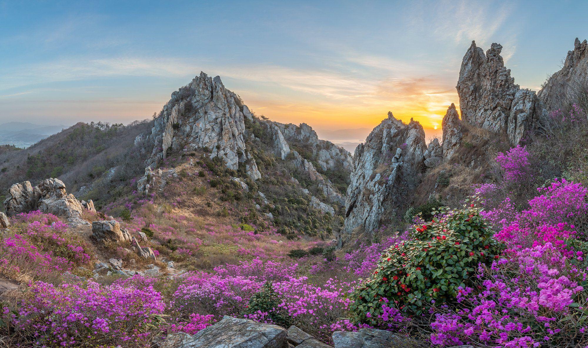 mountains,peak,hiking,spring,blossom,deokryongsan,korea, Ryu Jaeyoun