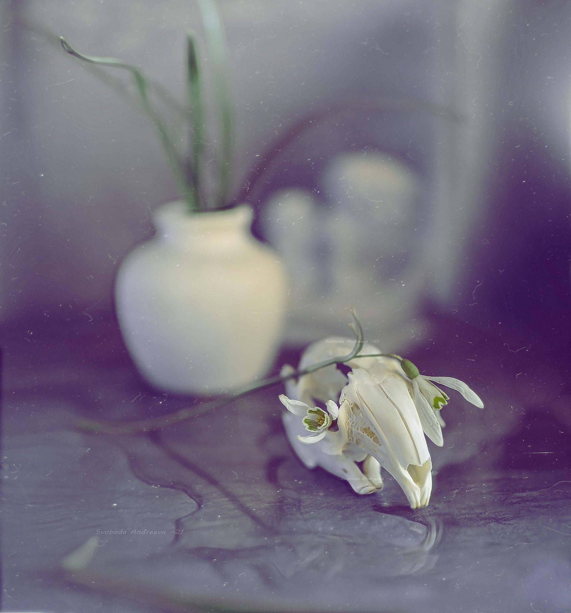 подснежник, череп, кролика, цветы, ваза, весна, белое, голубое, апрель, Andreeva Svoboda