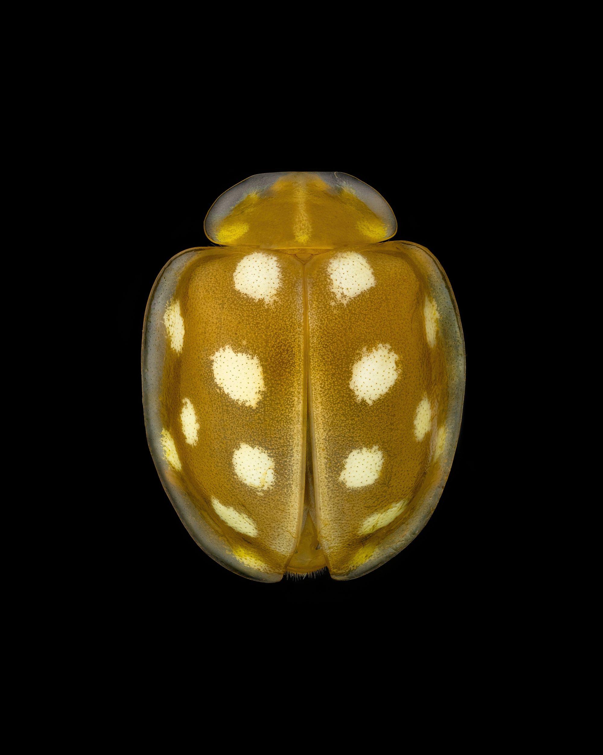 macro extrememacro insect, Орленко Антон