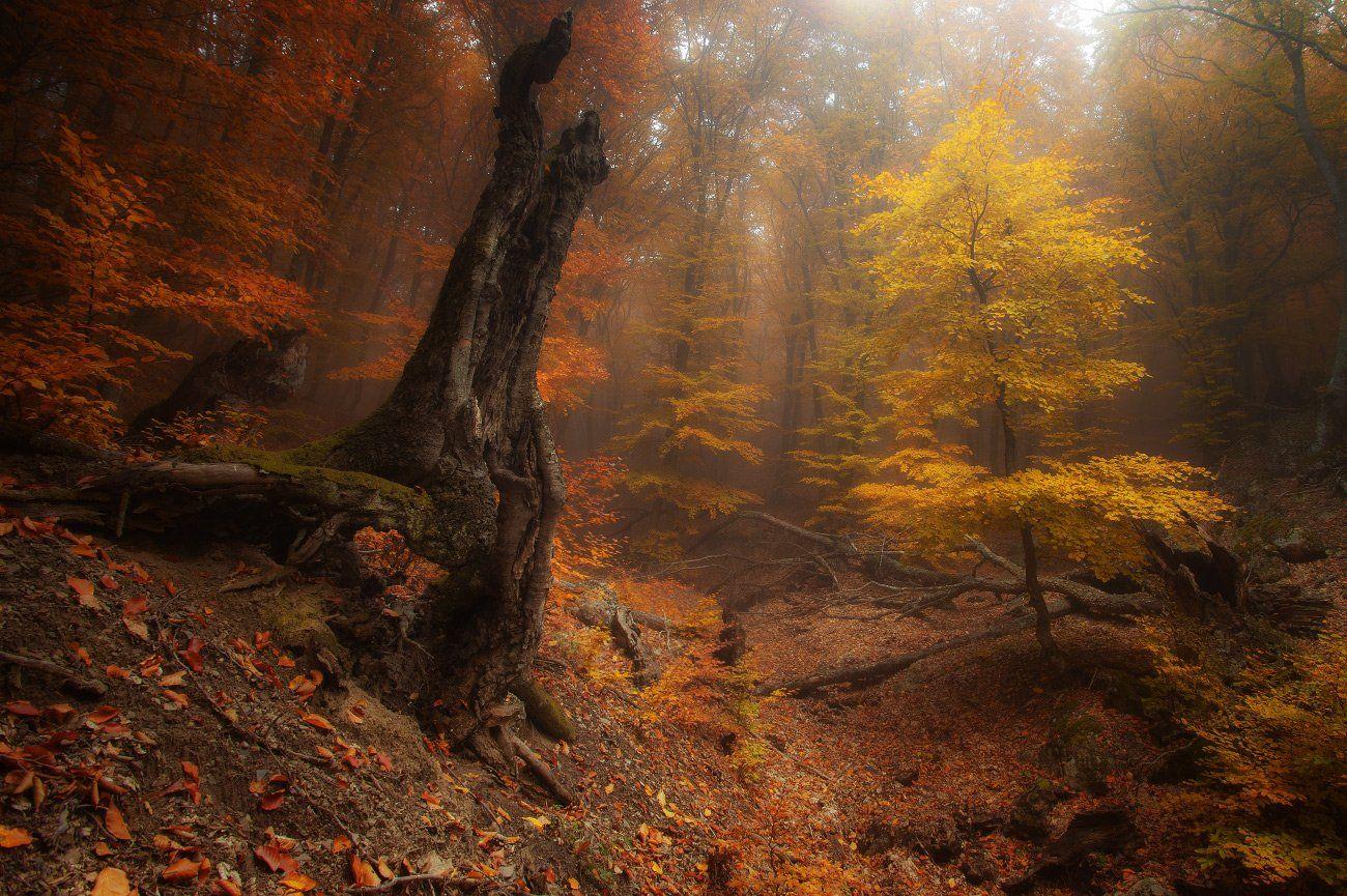 Демерджи, Лес, Осень, Туман, Андрей Уляшев (Mercand)