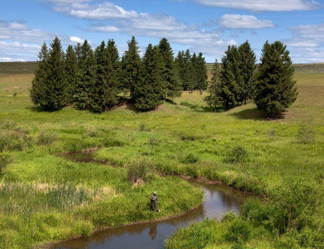 речка, трава, зелень, рыбак, стадо, елки, облака, Георгий Машковцев