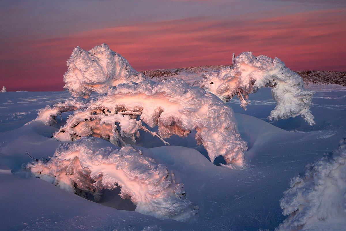 снег, пихты, вечер, новый год, шерегеш, горная шория, Валерий Пешков