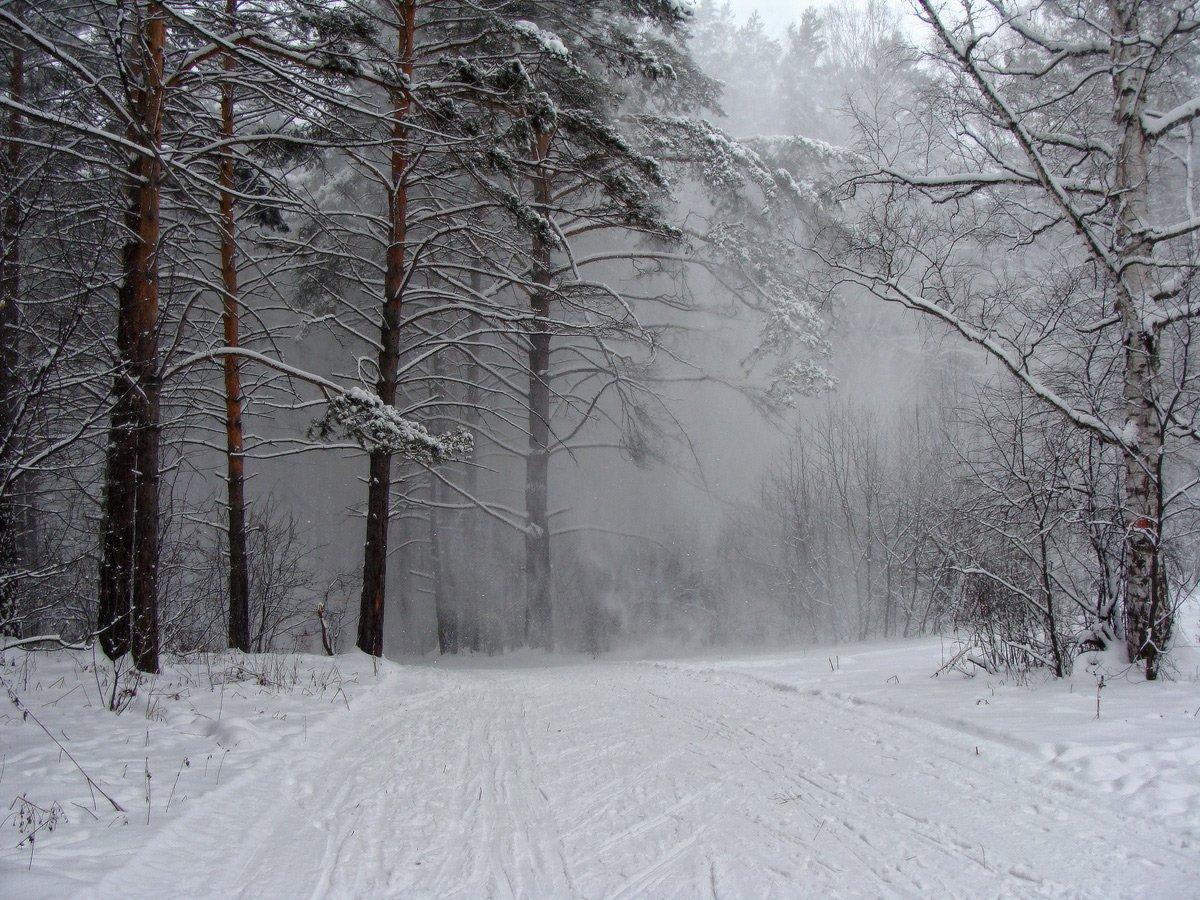 снег, метель, зима, сибирь, сосной бор, сосновка, Галина Хвостенко