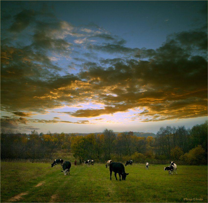 деревня, вечер, стадо, коровки, Виктор Перякин