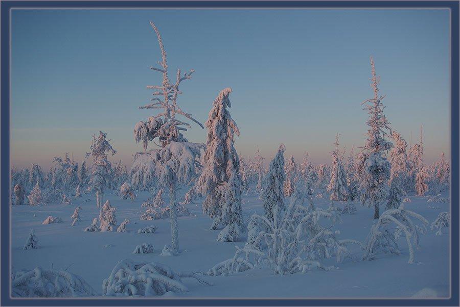 утро,тайга,зима,мороз, Солодухин Виктор