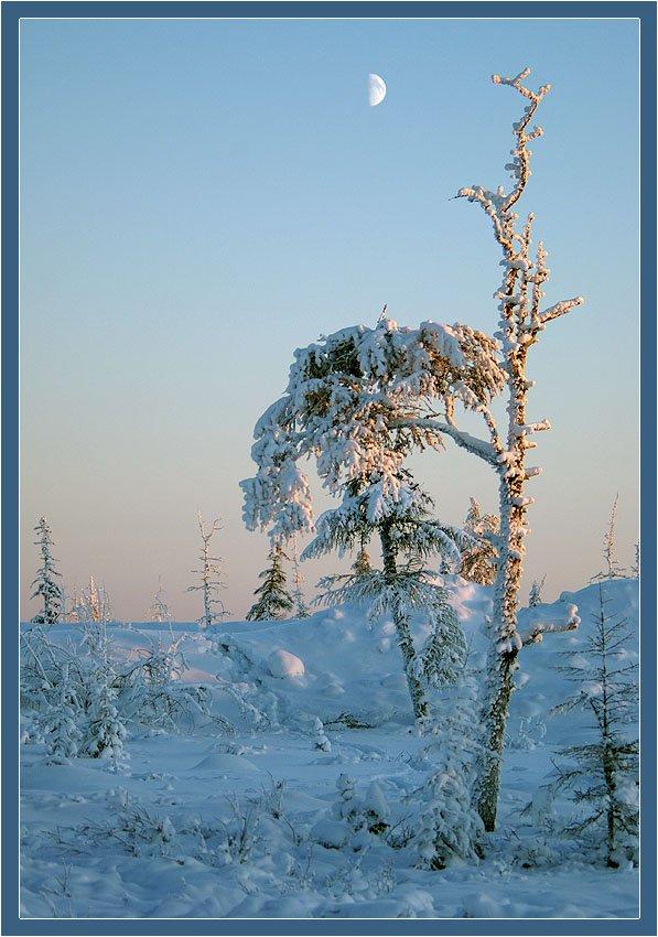тайга,зима, Солодухин Виктор