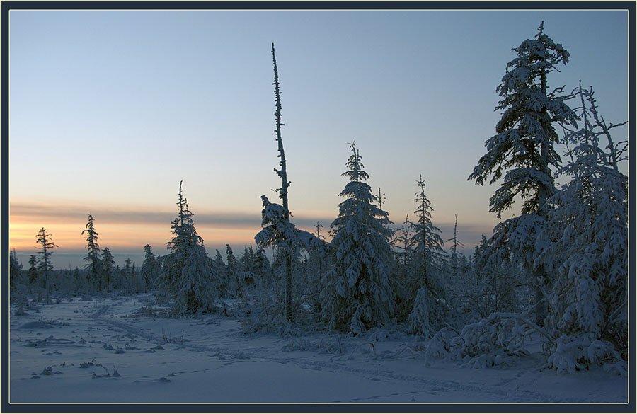 тайга,зима,вечер, Солодухин Виктор