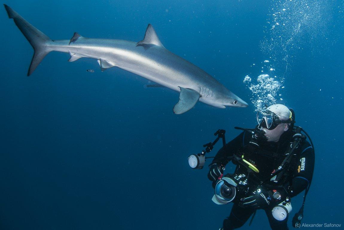 Shark, Александр Сафонов
