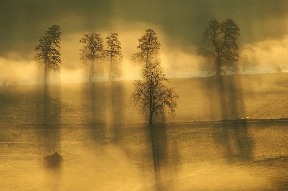 Morning, Poland, Sunrise, Tree, Robert
