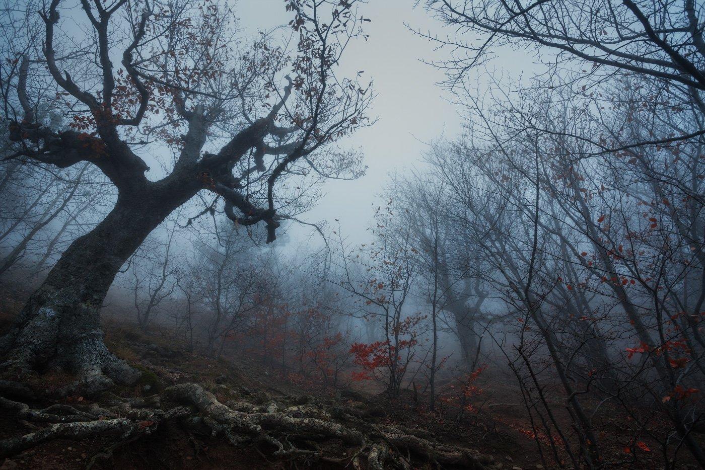 Готика, Демерджи, Осень, Туман, Андрей Уляшев (Mercand)