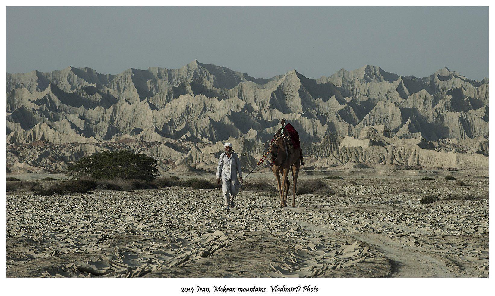 Верблюды, Иран, Мекран, VladimirD